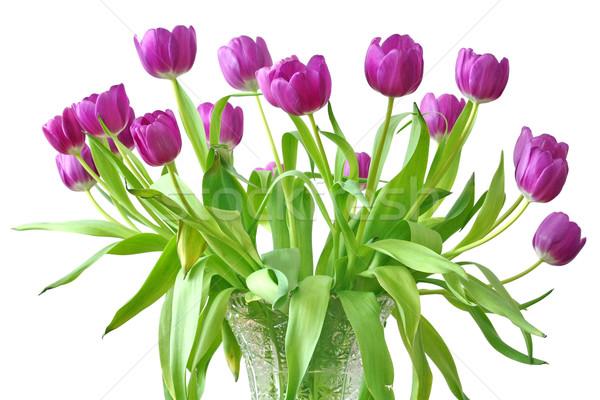 Violet tulpen voorjaar blad schoonheid groene Stockfoto © martin33