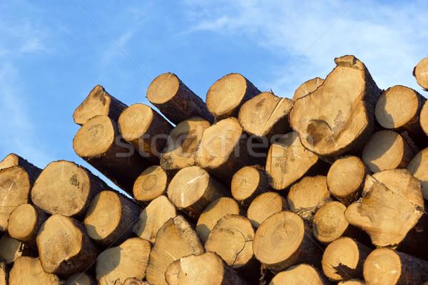 piled tree trunks Stock photo © martin33