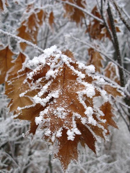 Congelés laisse bois forêt nature neige Photo stock © martin33