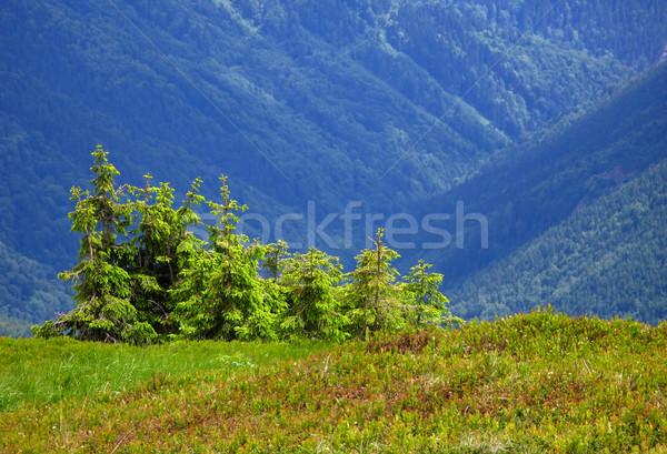 Dağ ağaçlar ağaç orman doğa ışık Stok fotoğraf © martin33