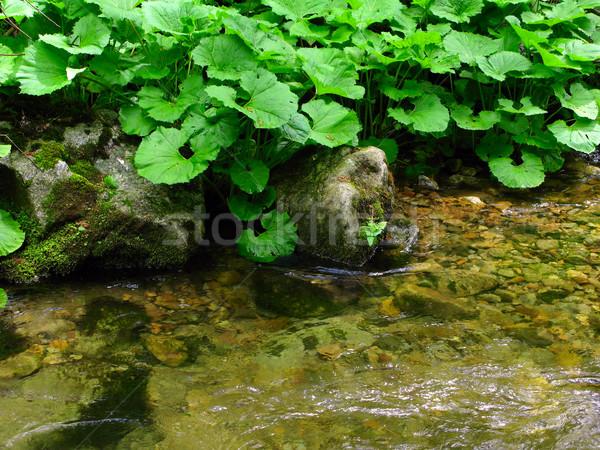 stream bank Stock photo © martin33