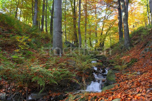 Forêt eau bois paysage arbres Photo stock © martin33