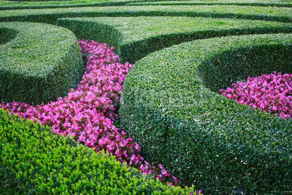 Parterre de fleurs arbre nature été vert parc Photo stock © martin33
