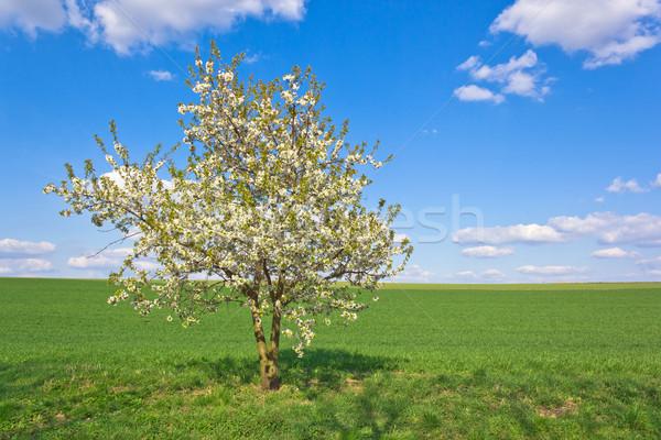 Boom groene landschap hemel gras Stockfoto © martin33