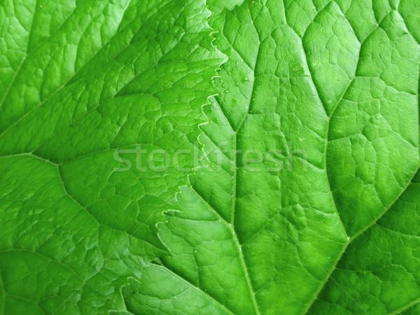 Yeşil yaprakları doku bahçe arka plan yaz bitki Stok fotoğraf © martin33