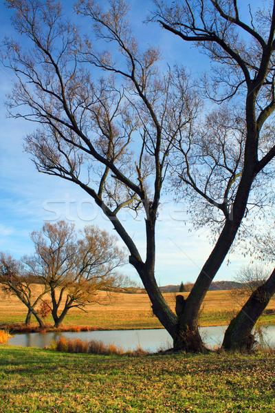 Sonbahar manzara gökyüzü ağaç doğa manzara Stok fotoğraf © martin33