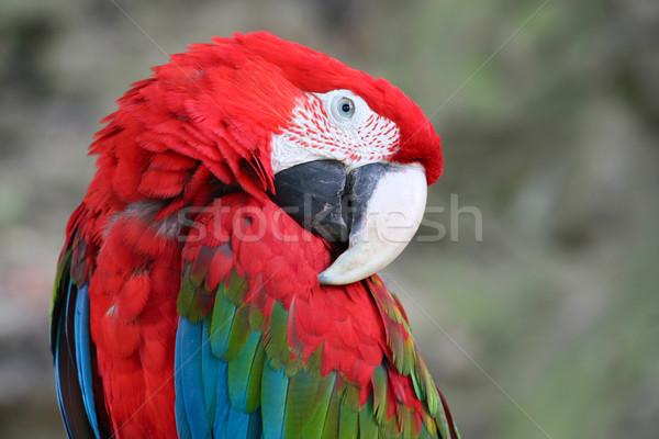 Vert bleu plumes portrait rouge jungle Photo stock © martin33