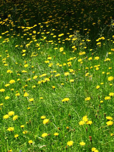 été prairie printemps herbe feuille jardin Photo stock © martin33