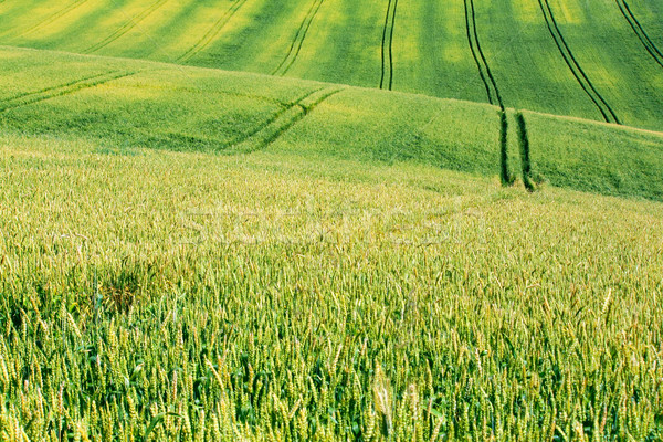 summer field Stock photo © martin33