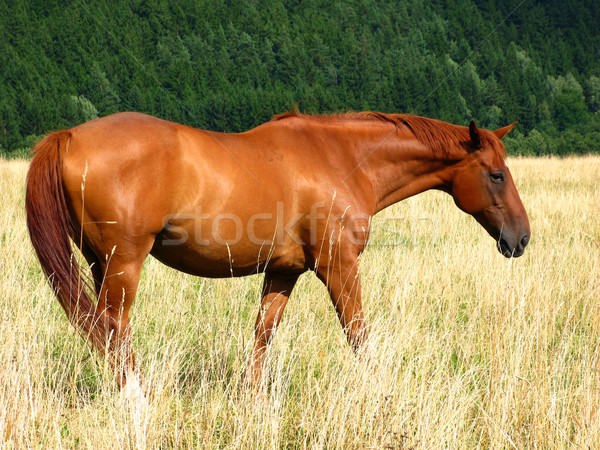 Cheval herbe nature été vert jeunes Photo stock © martin33