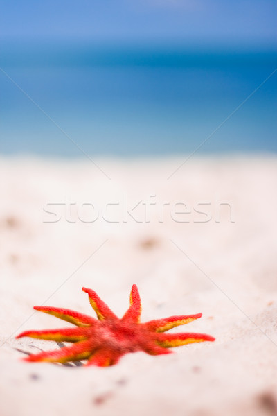 red starfish Stock photo © marylooo