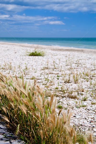 beach of Adriatic Sea, Italy Stock photo © marylooo