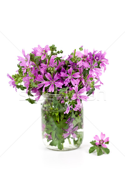 wild violet flowers in glass jar  Stock photo © marylooo