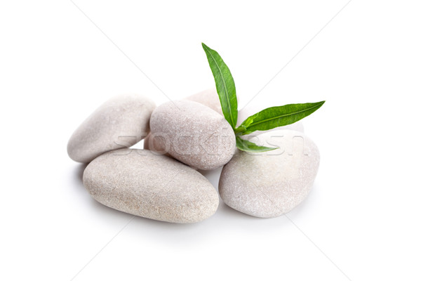 heap of stones and green leaves  Stock photo © marylooo