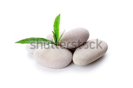 Stock photo: heap of stones and green leaves