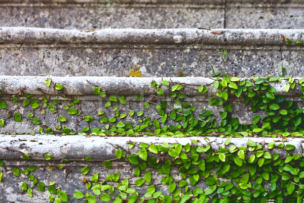 old stairs in park Stock photo © marylooo