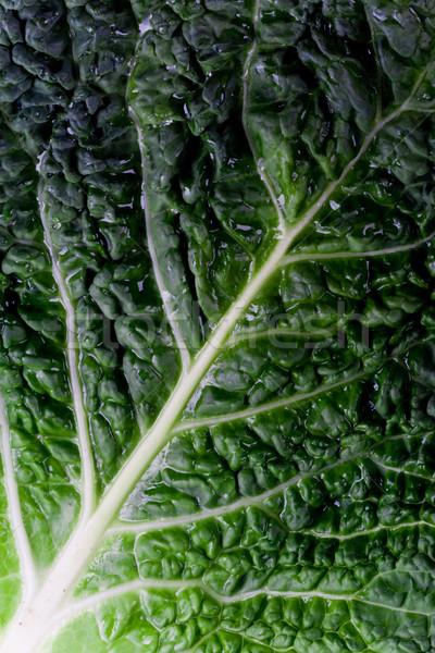 fresh savoy cabbage leaf Stock photo © marylooo