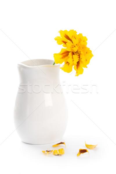 marigold flower in vase Stock photo © marylooo