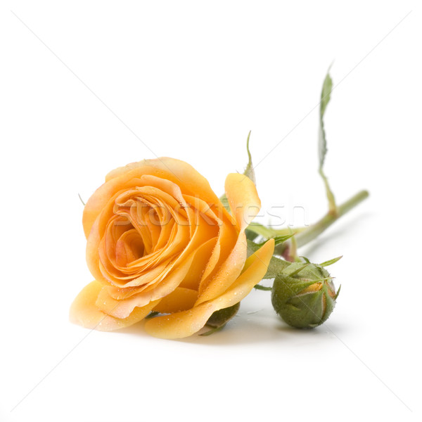 желтый цветок белый цветок весны природы лист Сток-фото © marylooo