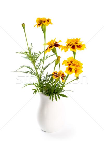 marigold flowers in vase Stock photo © marylooo