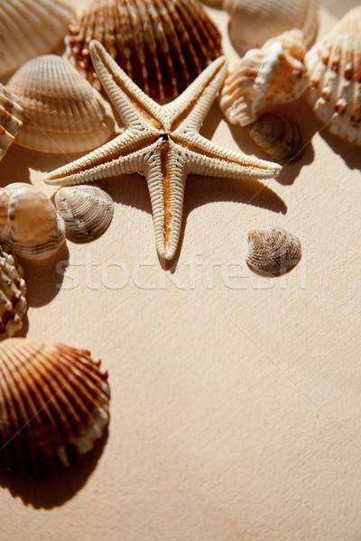 sea shells and star Stock photo © marylooo