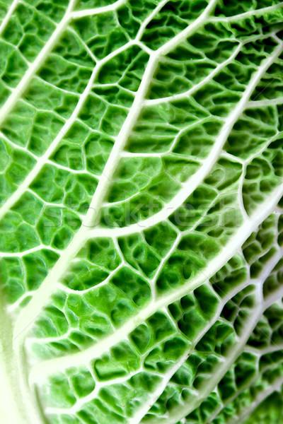 savoy cabbage leaf Stock photo © marylooo