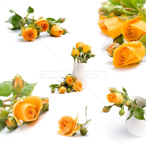 黄色の花 花束 白 花 春 結婚式 ストックフォト © marylooo
