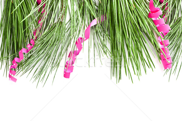 fir tree branch with serpentine Stock photo © marylooo