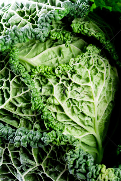 fresh savoy cabbage Stock photo © marylooo