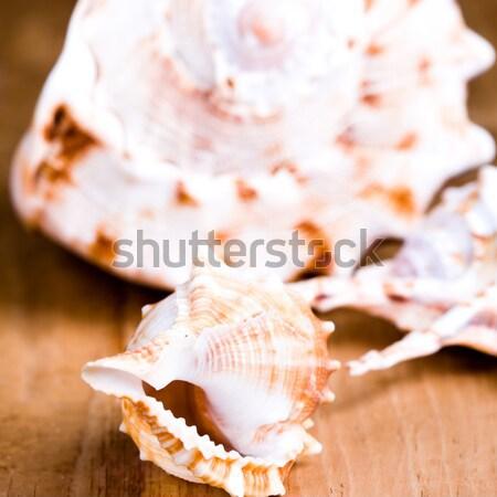 seashells and salt Stock photo © marylooo