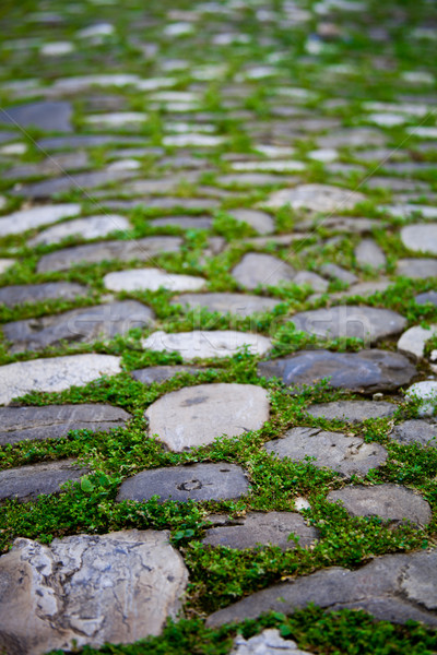 cobbles with moss on a pavement Stock photo © marylooo