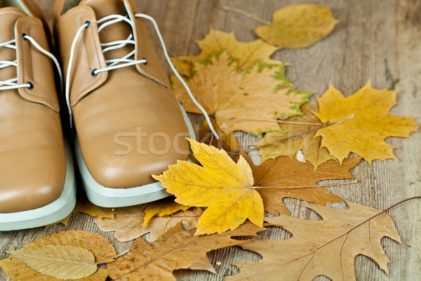 leather shoes and yellow leaves Stock photo © marylooo
