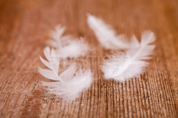 white downy feathers  Stock photo © marylooo