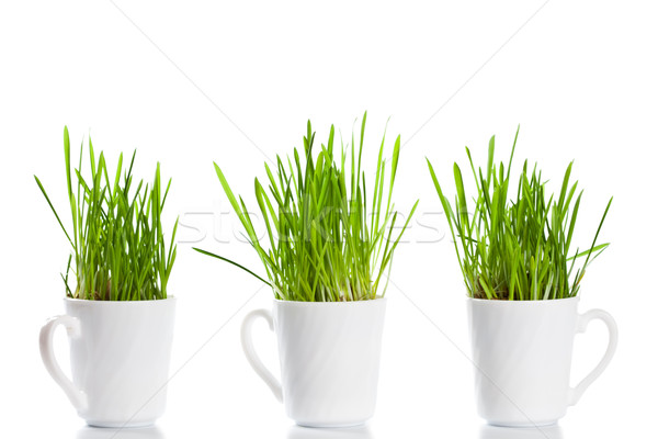 green grass in coffee cups Stock photo © marylooo