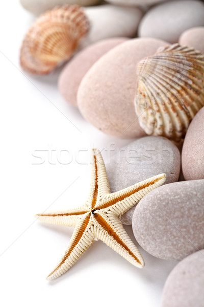 pile of stones, shells and sea star closeup on white background Stock photo © marylooo