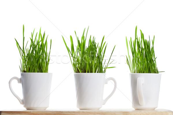 Frescos hierba verde las tazas de café aislado blanco primavera Foto stock © marylooo