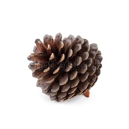 pine cone Stock photo © marylooo