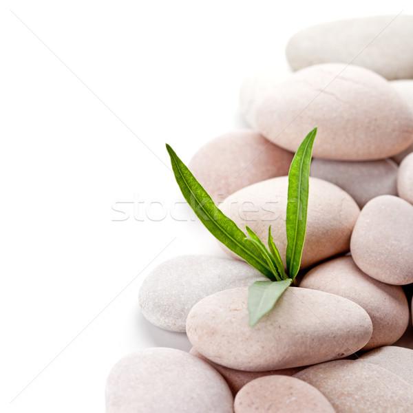 Stenen groene bladeren witte gras natuur Stockfoto © marylooo