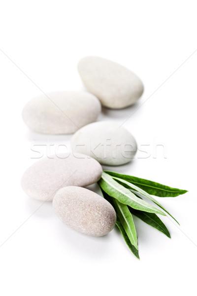 Folha verde pedras isolado branco primavera grama Foto stock © marylooo