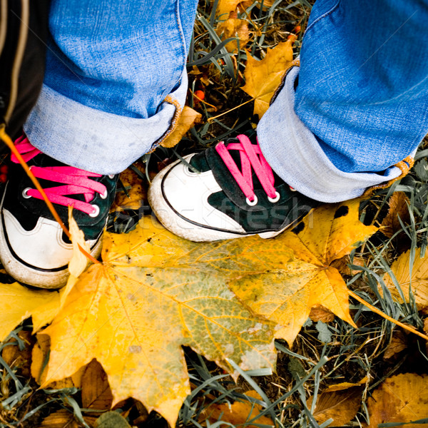 hiking shoes over yellow leaves Stock photo © marylooo