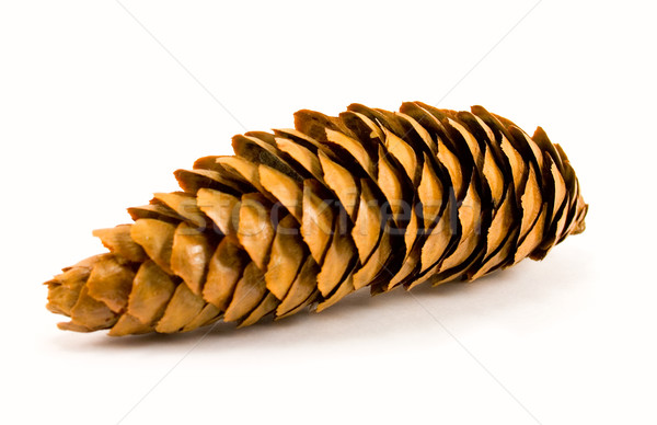 pine cone Stock photo © marylooo