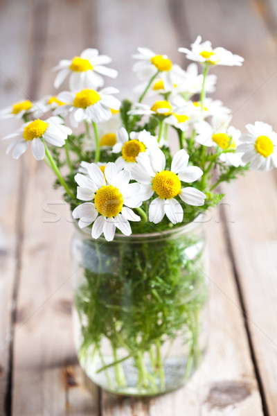 chamomile bouquet  Stock photo © marylooo