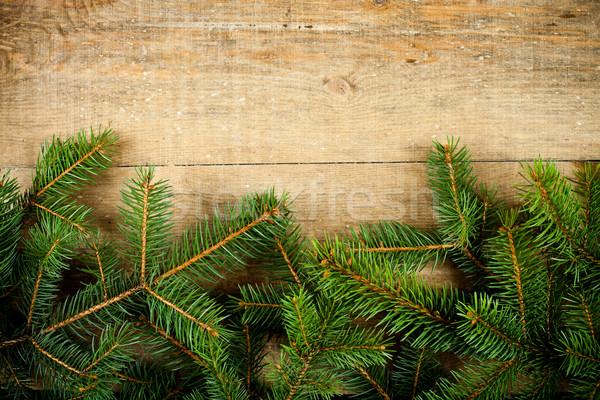 christmas fir tree  Stock photo © marylooo