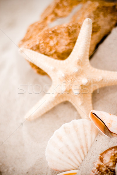 Zeester schelpen zand strand achtergrond steen Stockfoto © marylooo