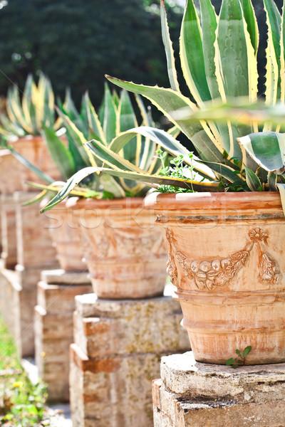 Tropicales jardin mur pierre usine antique Photo stock © marylooo