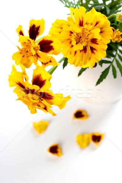 marigold flowers Stock photo © marylooo