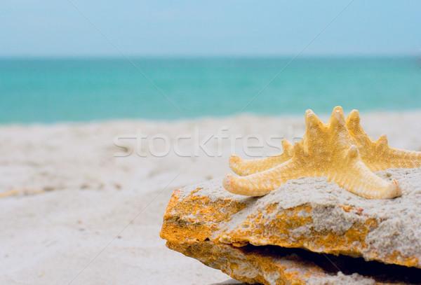 starfish on a ston Stock photo © marylooo