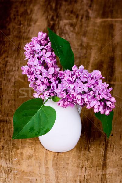 lilac blooms Stock photo © marylooo