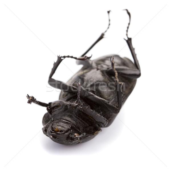 Halott rovar izolált fehér halál fekete Stock fotó © marylooo