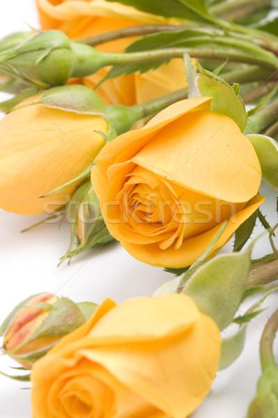 żółte kwiaty biały kwiat wiosną charakter Zdjęcia stock © marylooo